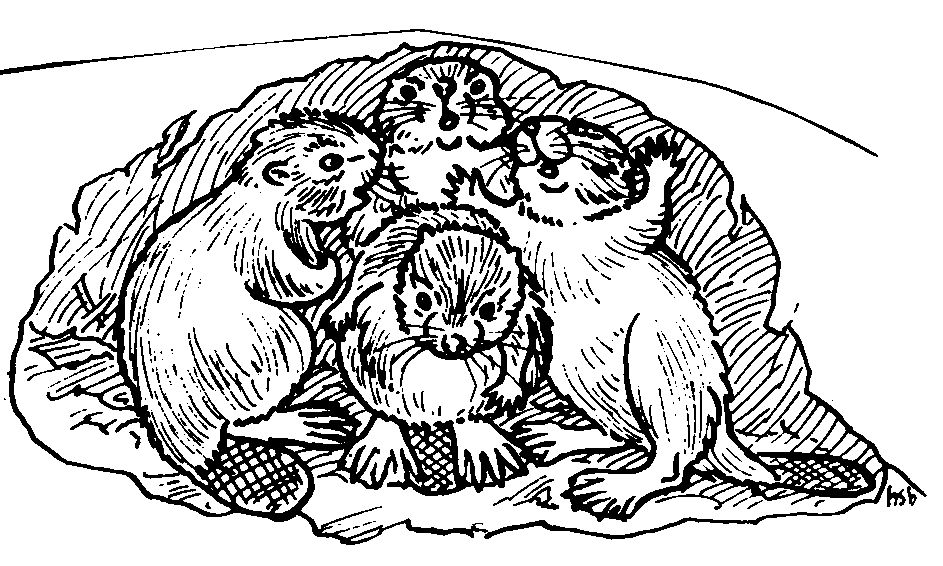 Beavers in lodge drawing by co-founder Hope Sawyer Buyukmihci