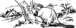 Beaver and tree drawing by co-founder Hope Sawyer Buyukmihci