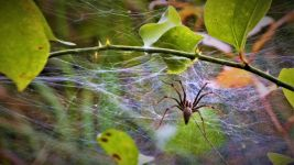 American grass spider, Unexpected Wildlife Refuge photo