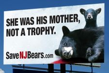 BEARS NJ bears billboard