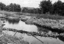 Beaver dam and waterways (undated)