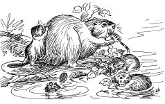 Drawing of beavers by Hope Sawyer Buyukmihci, Refuge co-founder and artist