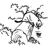 Sketch of beaver by Hope Sawyer Buyukmihci, artist and co-founder