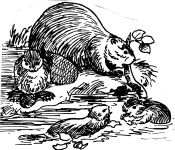 Family of beavers, sketch by Hope Sawyer Buyukmihci, Refuge co-founder and artist