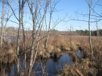 Beaver lodge in main pond, photo by Dave Sauder (Jan 2020)