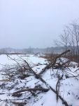 Beaver lodges in snow, Unexpected Wildlife Refuge photo