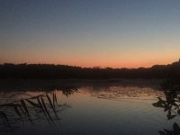 Beaver swimming in main pond, Venus visible, Unexpected Wildlife Refuge photo