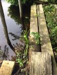 Boardwalk at main pond, Unexpected Wildlife Refuge photo