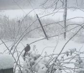 Brown thrasher in the snow, Unexpected Wildlife Refuge photo