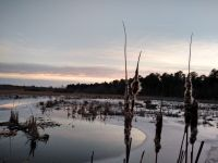 Cattails in Miller Pond at sunset with Canada geese overhead, Unexpected Wildlife Refuge photo