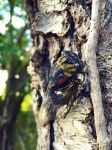 Cicada, Unexpected Wildlife Refuge photo