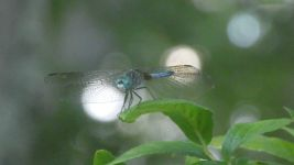 Dragonfly, Unexpected Wildlife Refuge photo