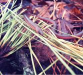 Eastern worm snake, Unexpected Wildlife Refuge