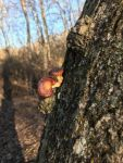 Fungi on living tree, Unexpected Wildlife Refuge photo