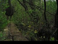 Great blue heron on boardwalk, Unexpected Wildlife Refuge trail camera photo