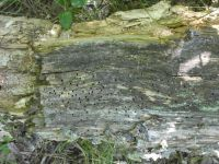 Insect holes in log, Unexpected Wildlife Refuge photo