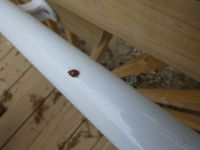 Ladybug on Headquarters stairs, Unexpected Wildlife Refuge photo