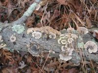 Lichen and fungi on log, photo by Dave Sauder