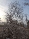 First frost at main pond, Unexpected Wildlife Refuge photo