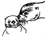 Mother otter with pup sketch by Hope Sawyer Buyukmihci