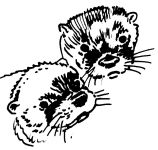 Otter faces drawing by co-founder Hope Sawyer Buyukmihci