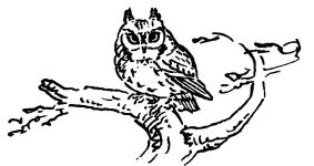 Great horned owl drawing by co-founder Hope Sawyer Buyukmihci