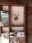 Polistes wasps with their nest in a Refuge literature display case, photo by Dave Sauder (Oct 2018)