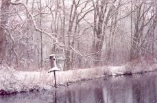 Main pond on a snowy day in November 2008, Unexpected Wildlife Refuge photo