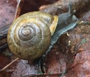 Snail, Unexpected Wildlife Refuge photo