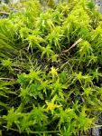 Spiky bog moss, Unexpected Wildlife Refuge photo
