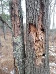 Termite borings in dead trees, Unexpected Wildlife Refuge photo